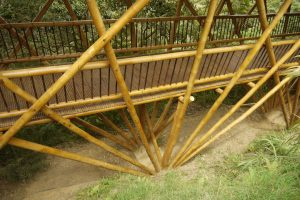 Beneficios del bambu