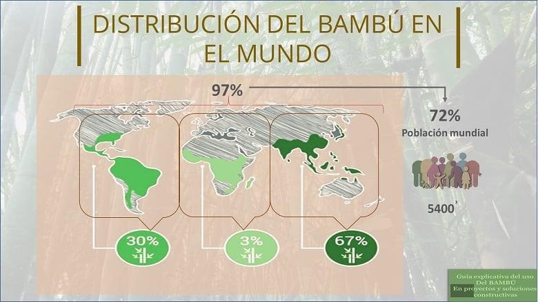 Distribución del bambú